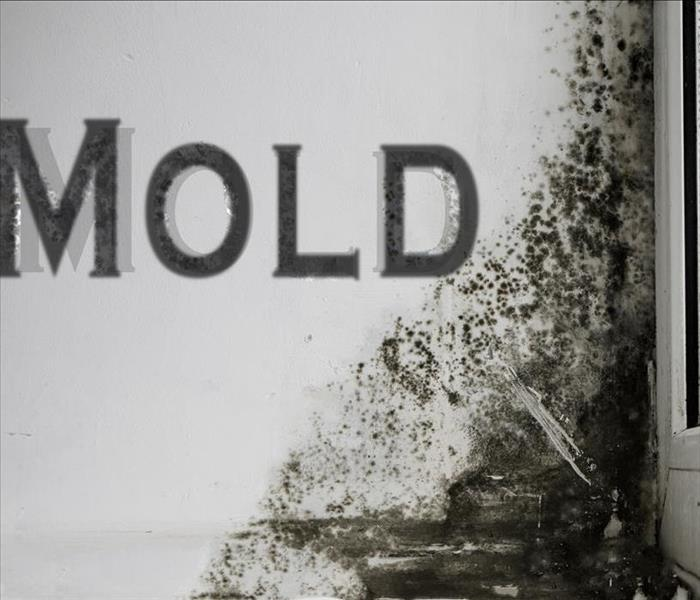 Mold Remediation MOLD!! HOW? WHY? WHERE? SERVPRO Does Mold Remediation in Pembroke Pines